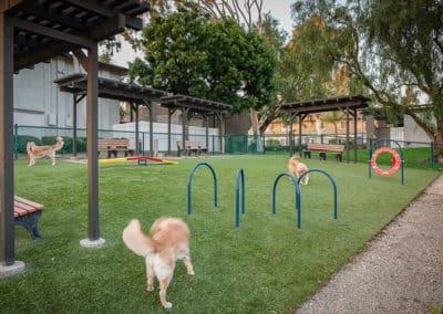 Park Area: Pet-Friendly