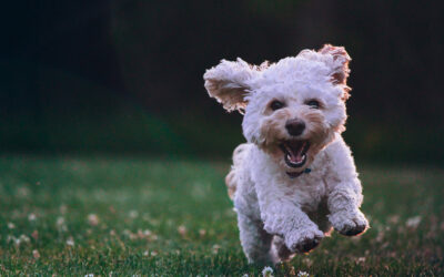 Everything You Need to Know about Pets at Yorba Linda Pines & Villas